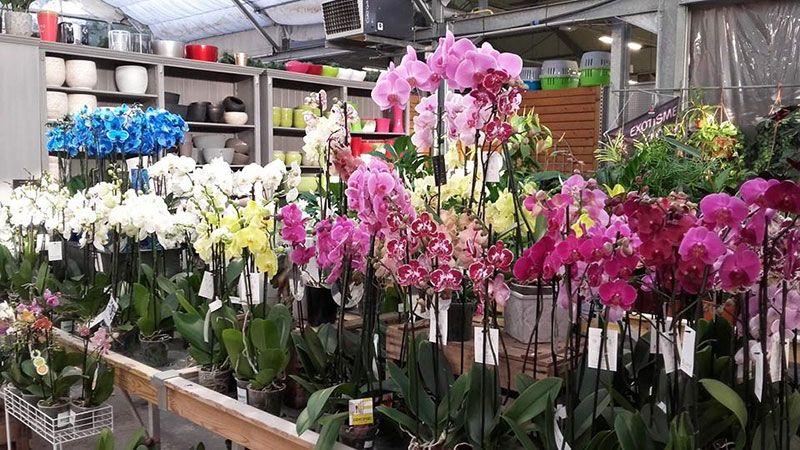 Orchidées Jardinerie Baron