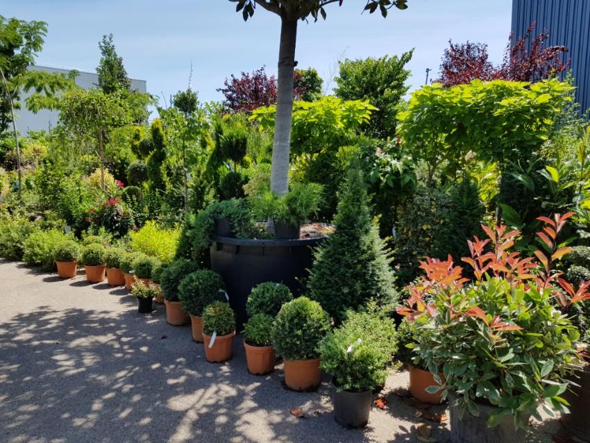 Espace pépinière Des Jardins de la Cotière