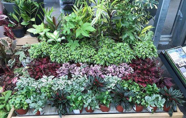 Plantes de la Jardinerie Labelle