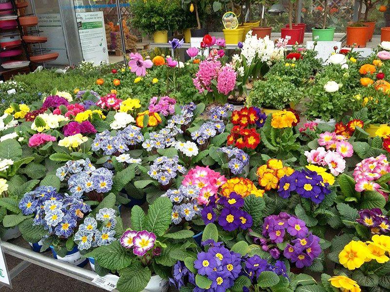 Les plantes fleuries de la Jardinerie Labelle