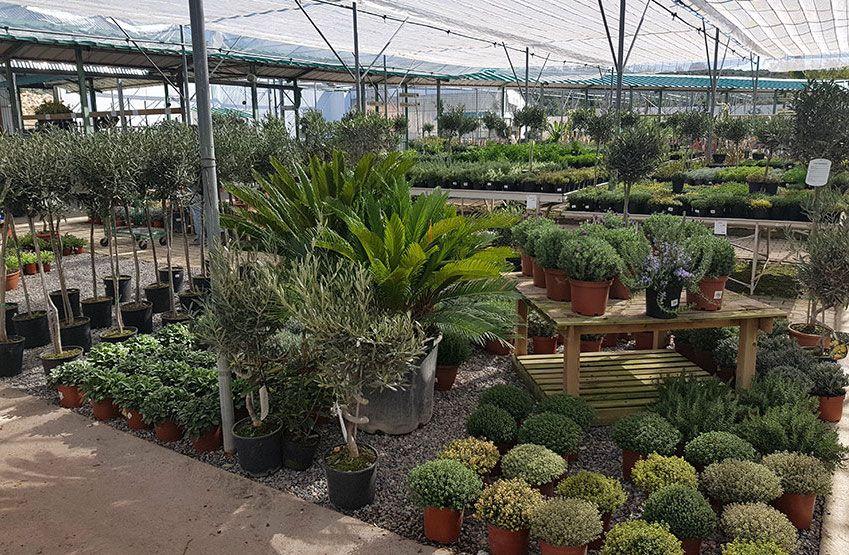 Les plantes méditerranéennes