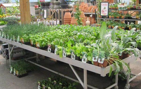 Plants potagers Jardin Décor