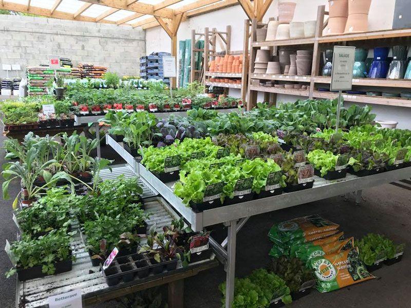 Plants potagers de la Jardinerie Labelle