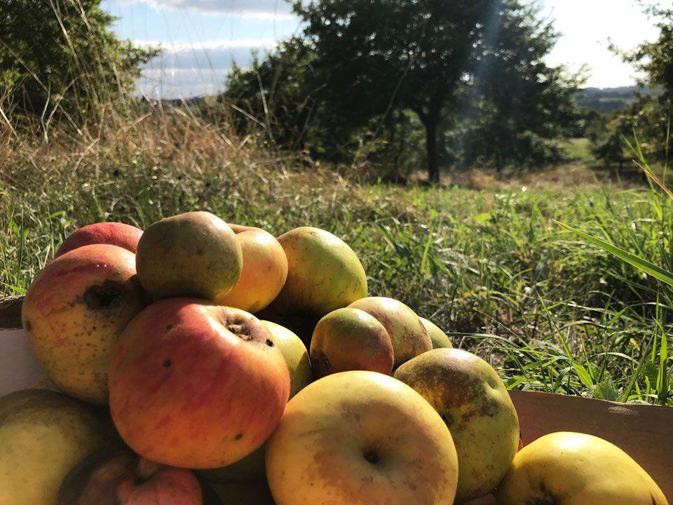 Pommes du Perche