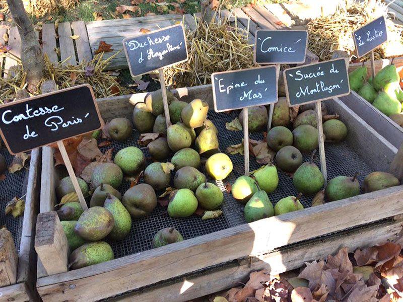 Production de fruits des Pépinières Chatelain
