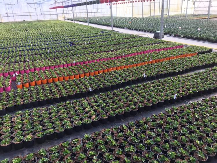 Production horticole
