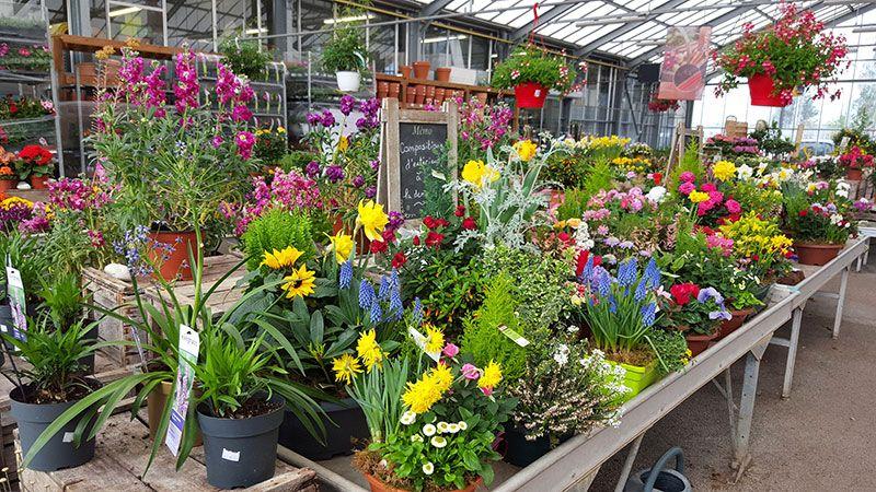Production horticole de la Jardinerie Baron