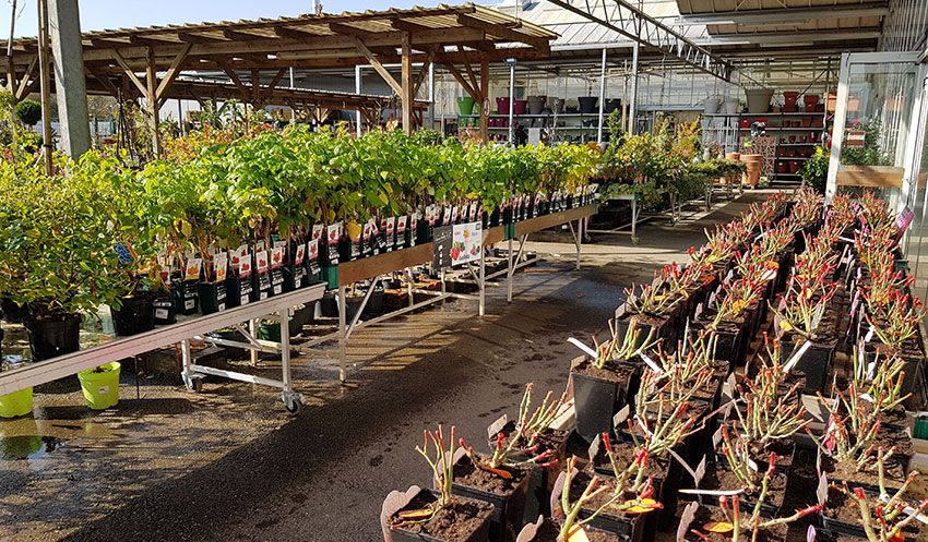 Production horticole des Jardins du Sonnenhof