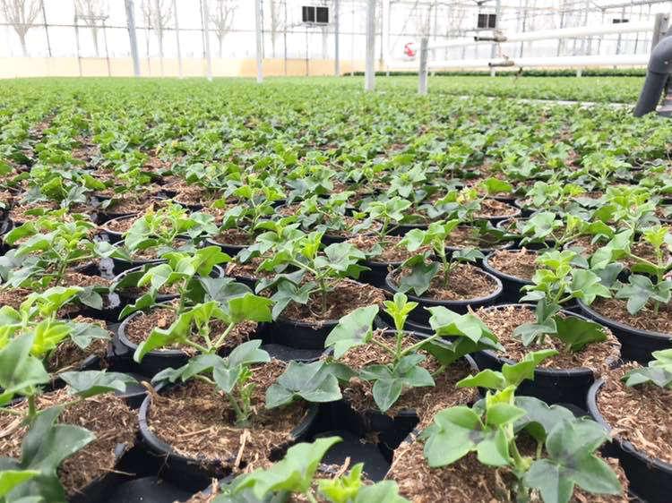 La production horticole