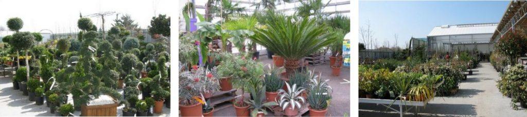 Les végétaux de la jardinerie Loisiflor
