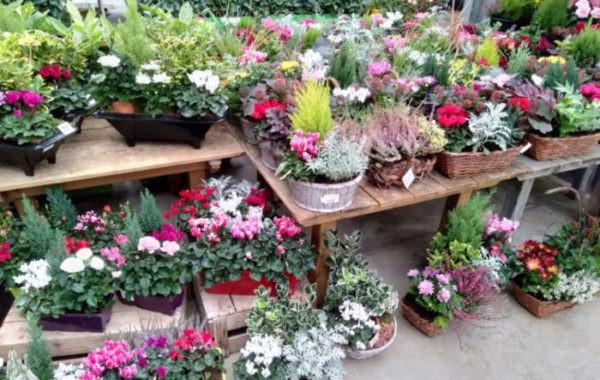 Compositions florales des Jardins de Grand Lieu