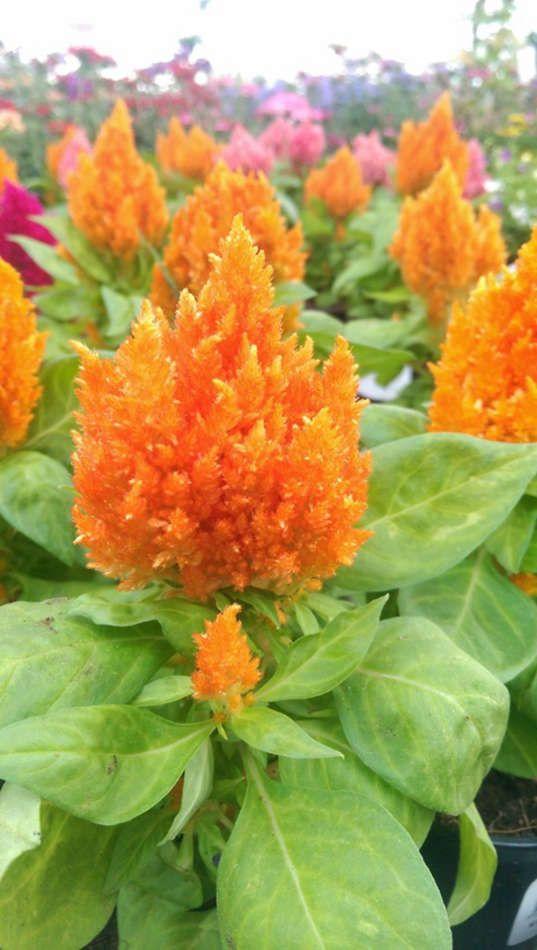Les fleurs du Jardin des Saules