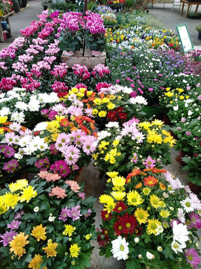 Les fleurs des Jardins de Grand Lieu