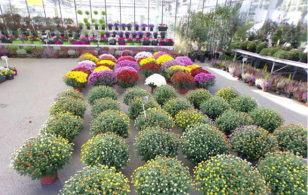 Jardinerie Dekester