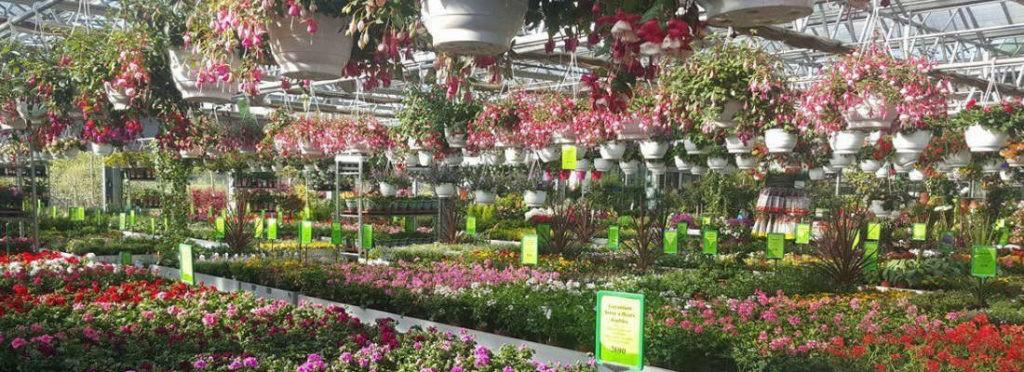 Jardinerie Florest