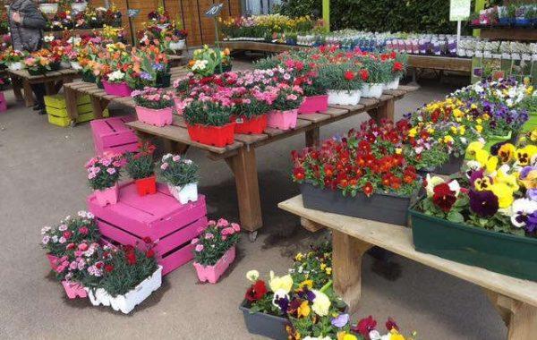 Jardinerie Lecerre Fleurs