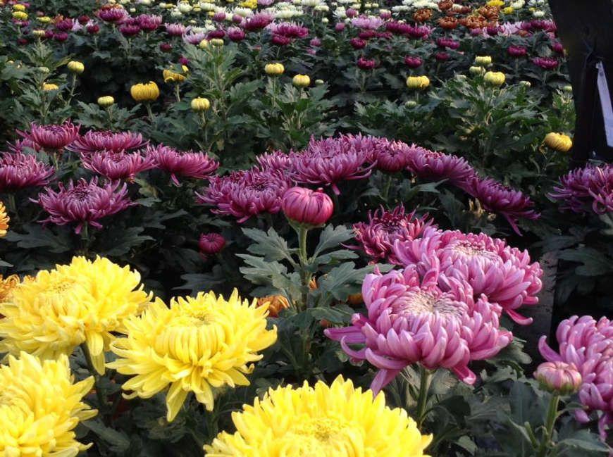Les végétaux de la jardinerie des Serres de Drezet