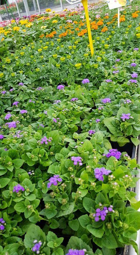 Les végétaux de Lecerre Fleurs