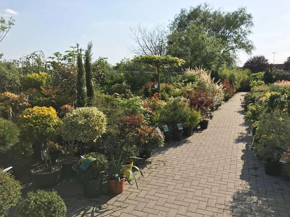 L'espace pépinière de la Jardinerie Florest