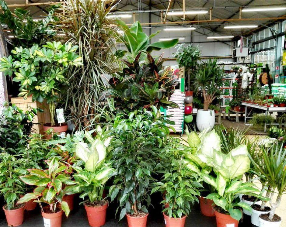 Les plantes d'intérieur du Jardin des Saules