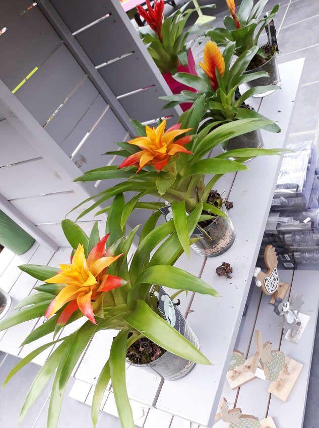 Les plantes d'intérieur de Lecerre Fleurs