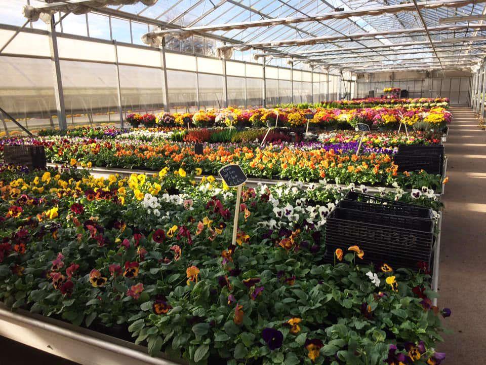 Production horticole de la Jardinerie Dekester