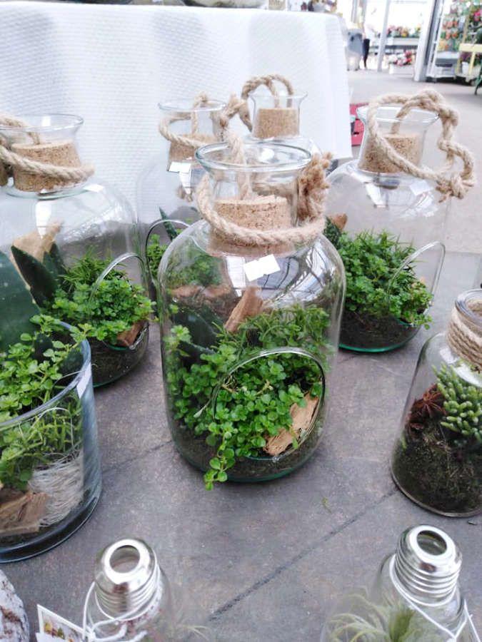 Les terrariums