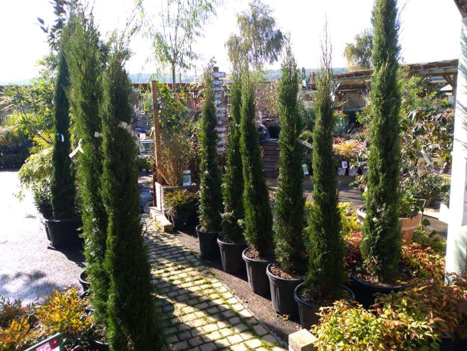 Les végétaux d'extérieur du Jardin des Saules