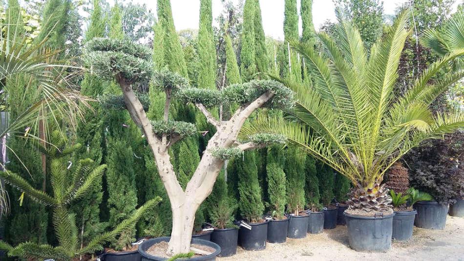 Les arbres de la Pépinière Terra Verde