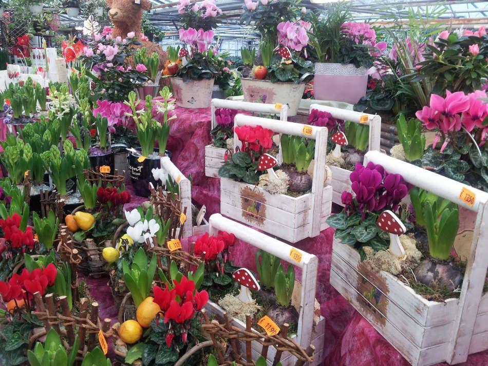 Les compositions florales des Serres du Vexin