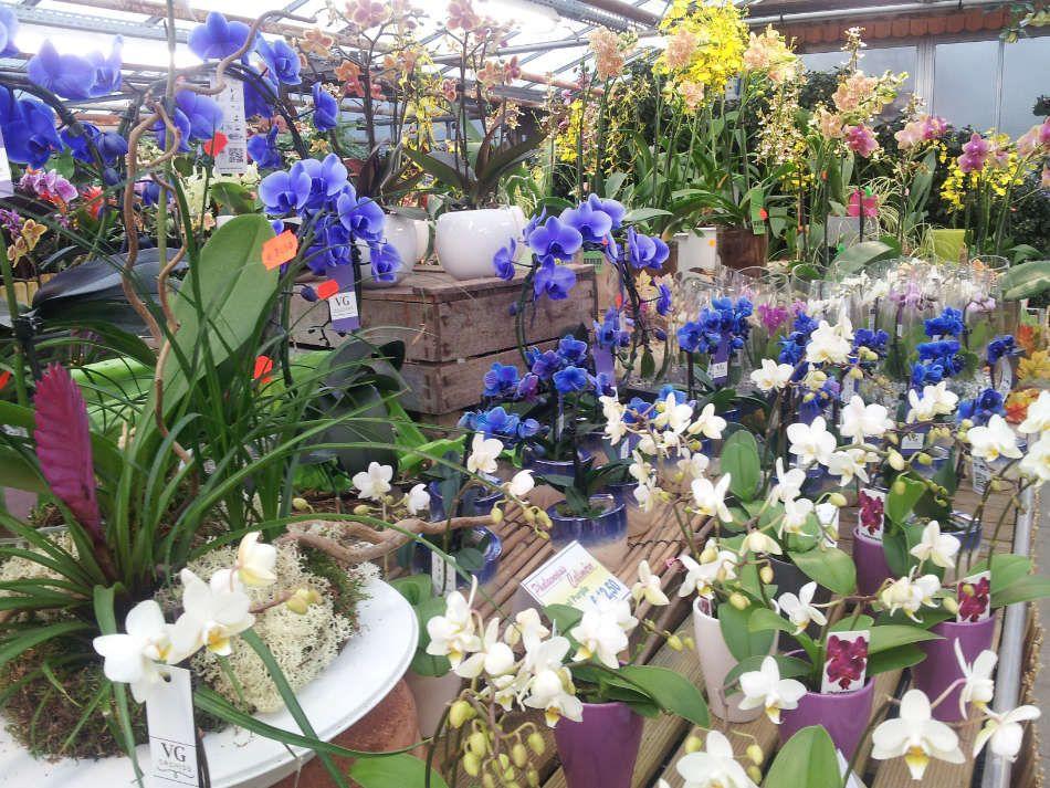 Espace fleuristerie des Serres du Vexin