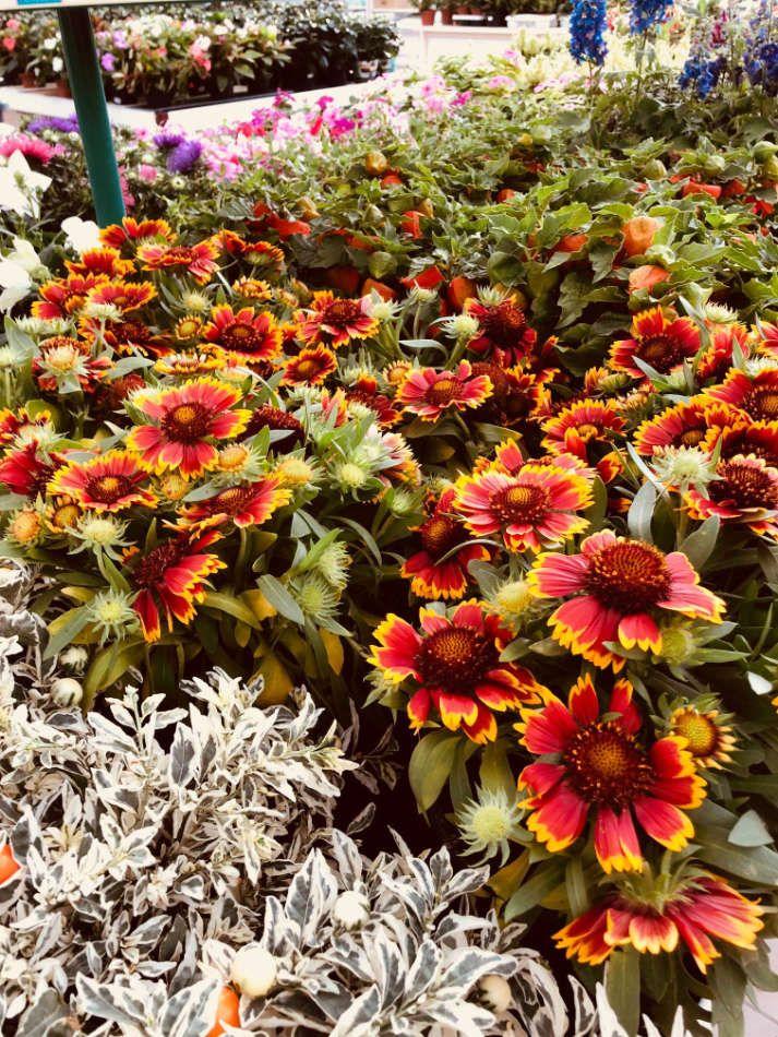 Les plantes fleuries de la Serre de Thionville