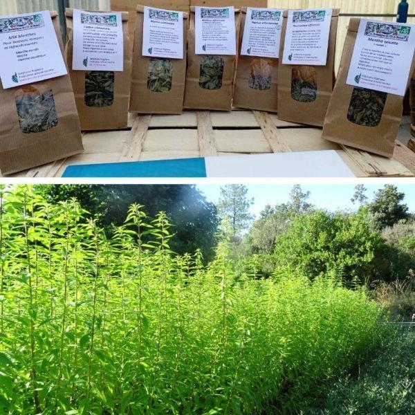 Assortiment d'herbes séchées pour infusions