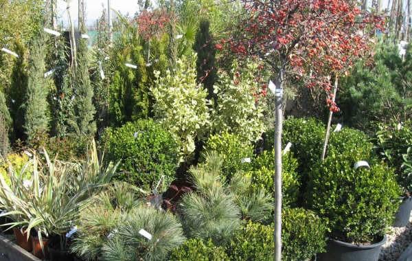Jardinerie Atlantic Vert Challans