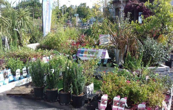 Jardinerie Atlantic Vert Plougoumelen