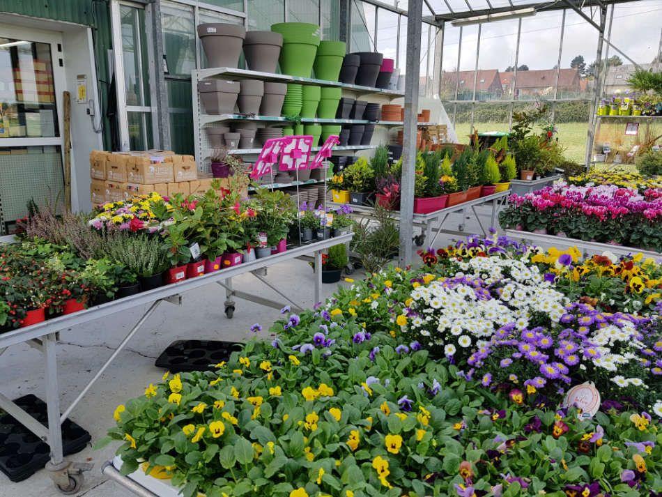 Jardinerie Euralys Hazebrouck