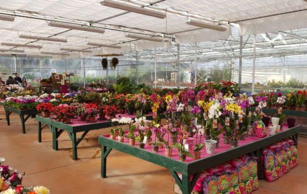 Jardinerie Lemire Fleurs