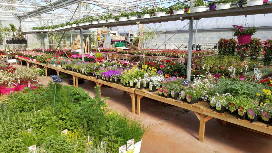 La jardinerie Lemire Fleurs