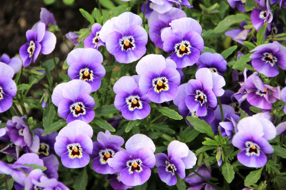 Plantes fleuries de saison