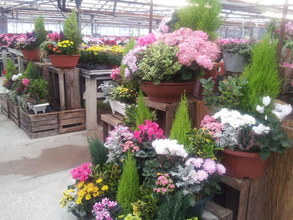 Les plantes fleuries des Serres du Vexin