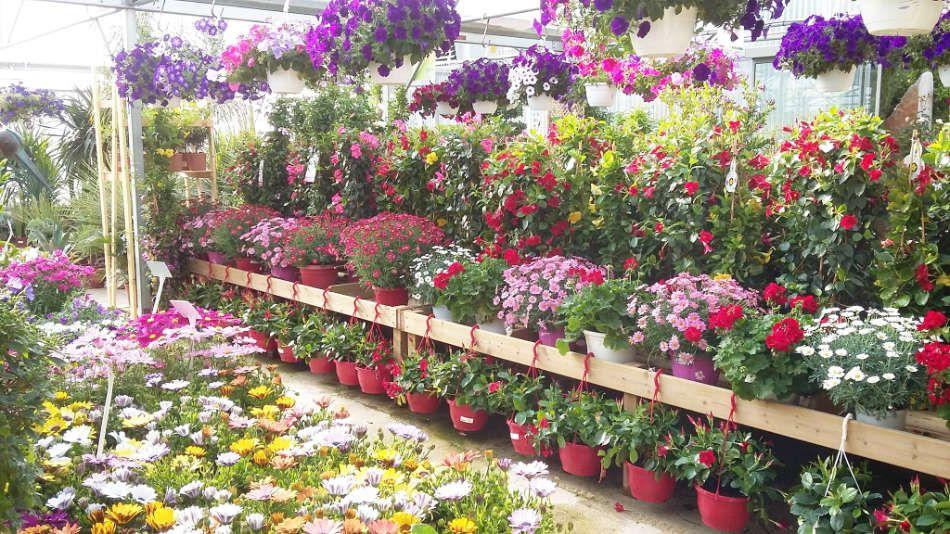Le marché aux fleurs de la Pépinière Terra Verde