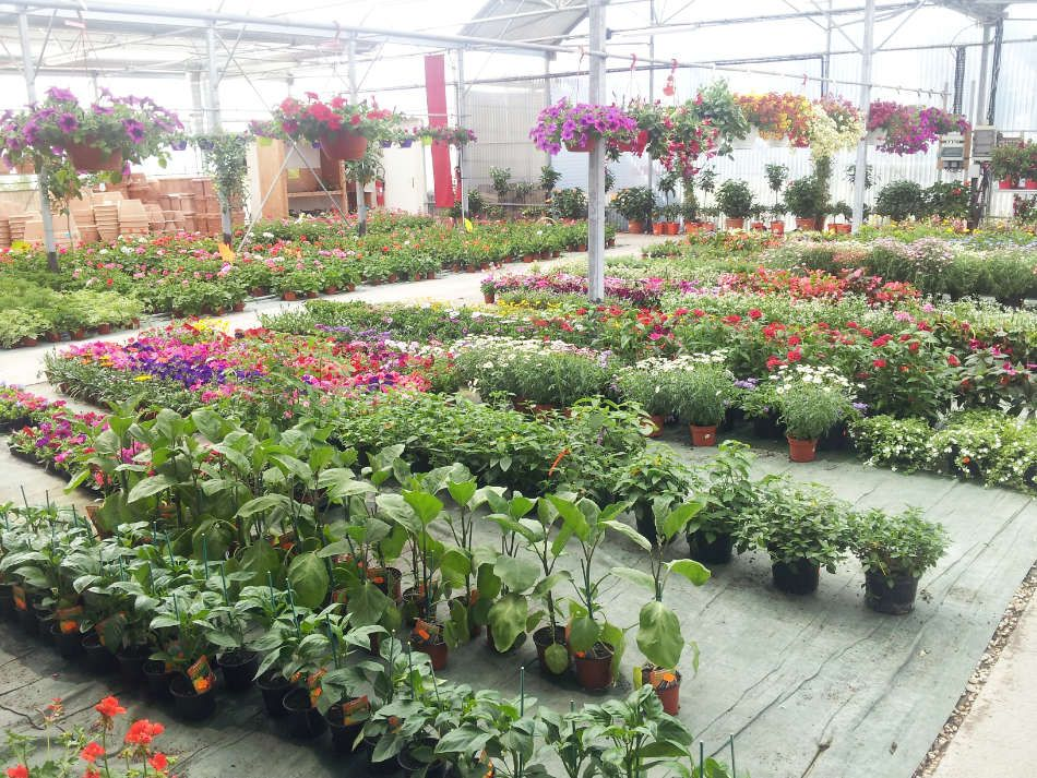 Le marché aux fleurs des Serres de Saint-André