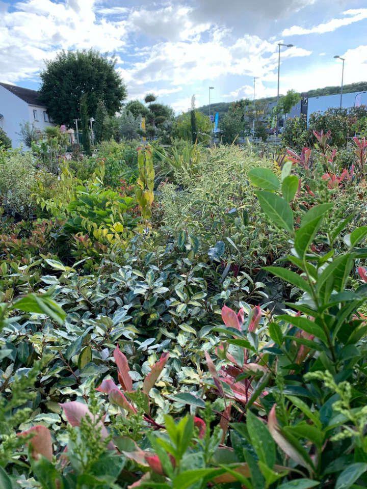 Pépinière de la jardinerie Lemire Fleurs