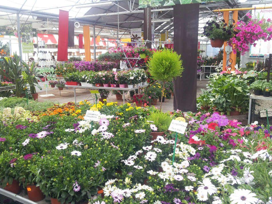 Les plantes fleuries des Serres de Saint-André