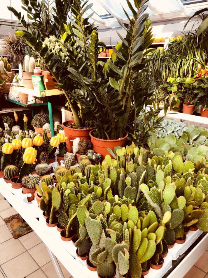 Cactus et plantes vertes d'intérieur