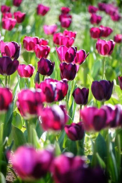 Marché des Fleurs et Jardins de Sarrebourg