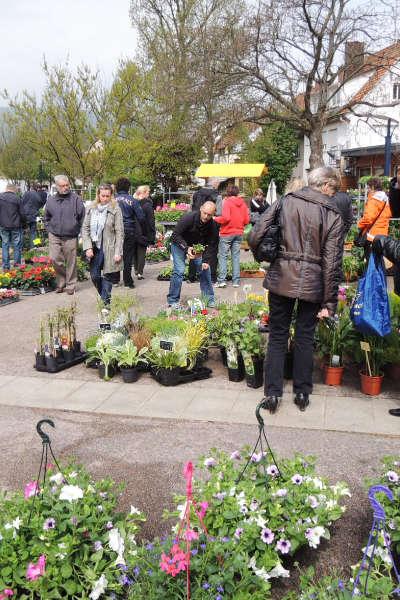 Marché aux fleurs de Niederbronn-les-Bains