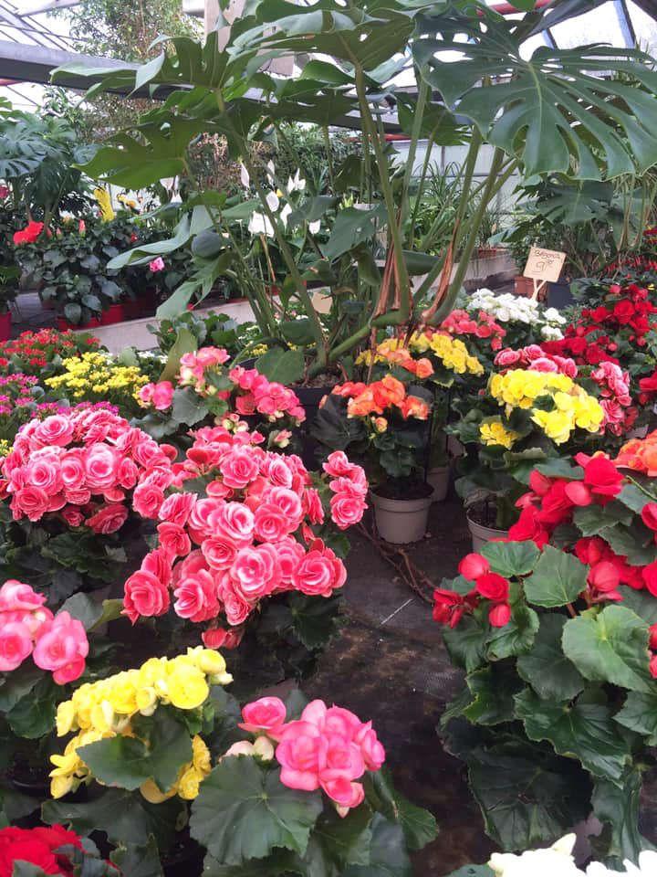Les plantes vertes et fleuries