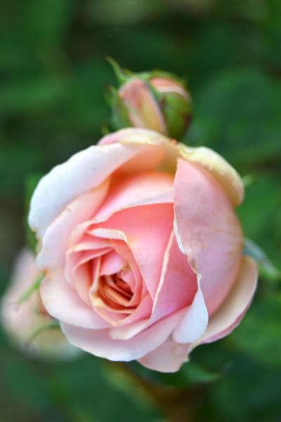 Portes ouvertes à la pépinière Auprès des roses