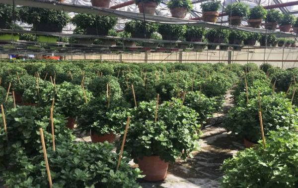 Production de plantes